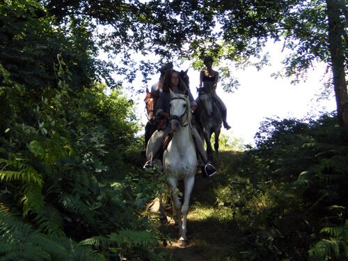 Equitation en Landes d'Armagnac
