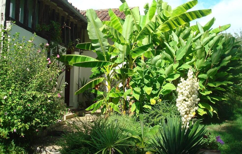 2018 - Jardin Tropical à l'Airial aux Châtaignes