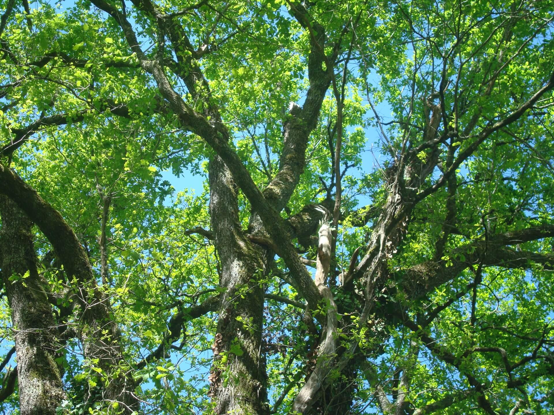 2020 - Frondaisons/Foliage
